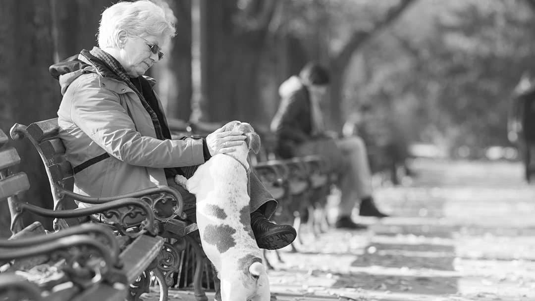ginocchio-medicina-rigenerativa-cane-anziana