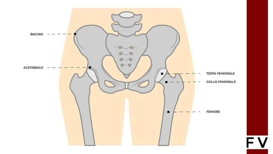 articolazione anca